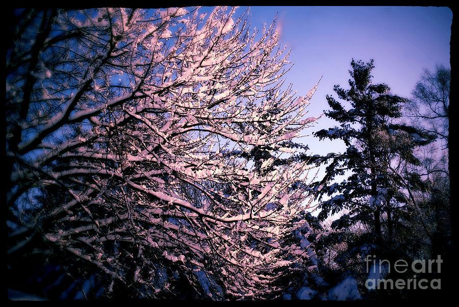Last Peek Of Winter Sun Photograph