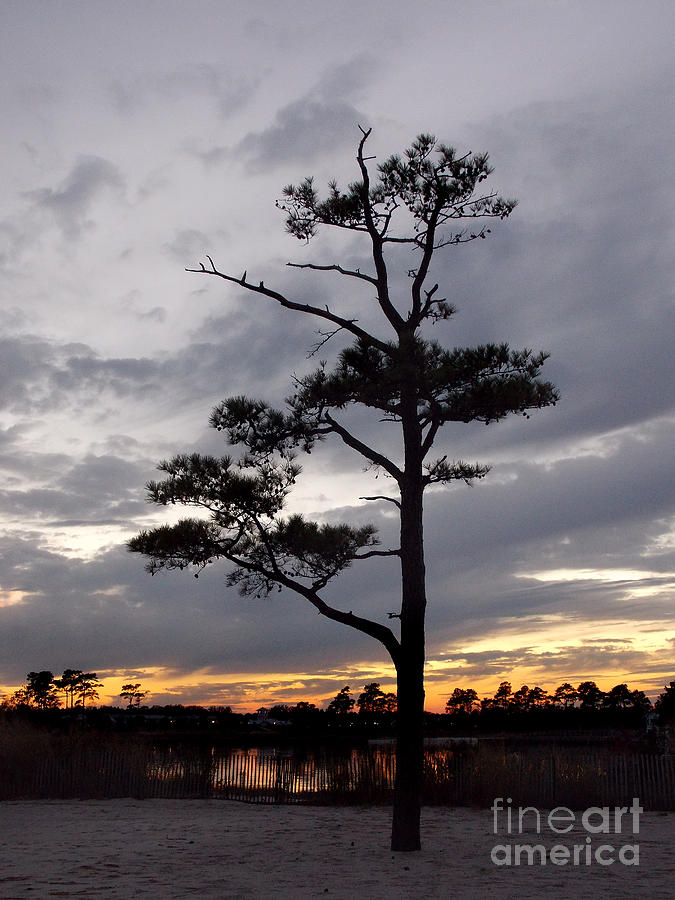 Scenic Tours Photograph - Last Tree Standing by Skip Willits