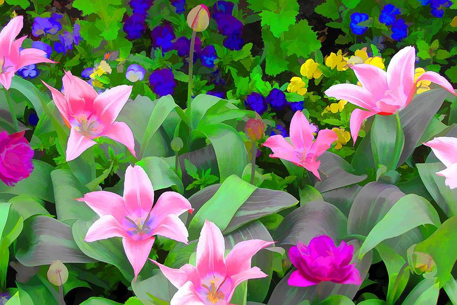 Tulips Photograph - Late Bloomer by John Freidenberg