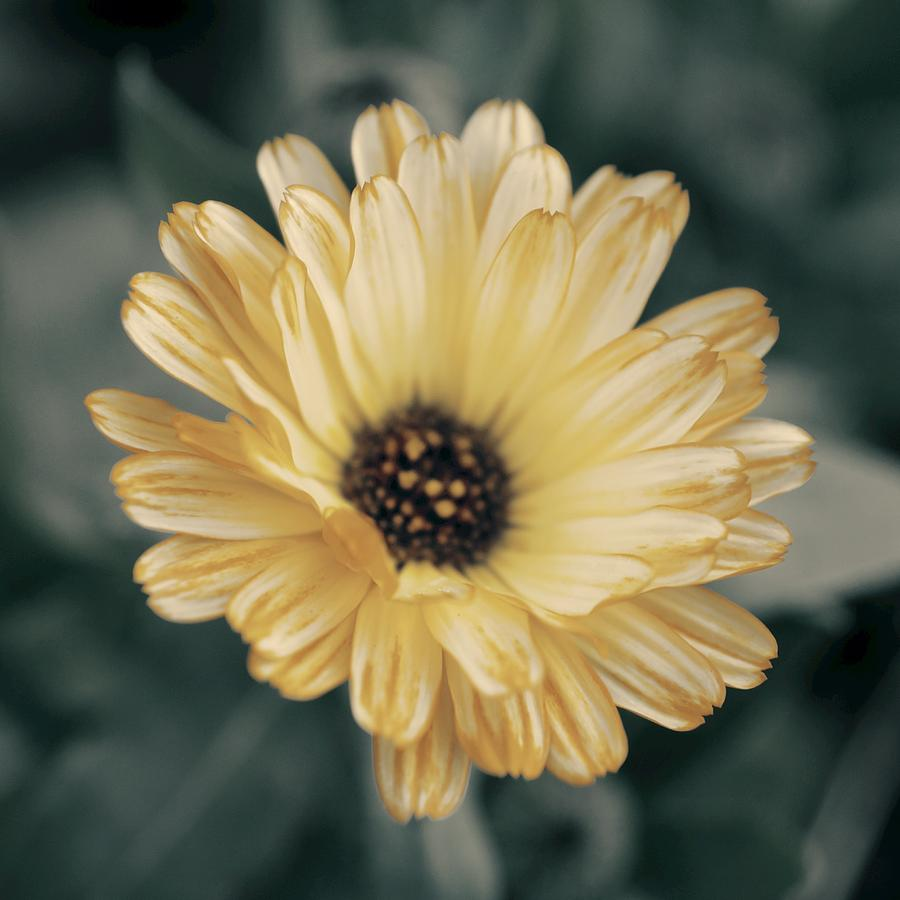 Bloom Photograph - Late Bloomer by Photographic Arts And Design Studio