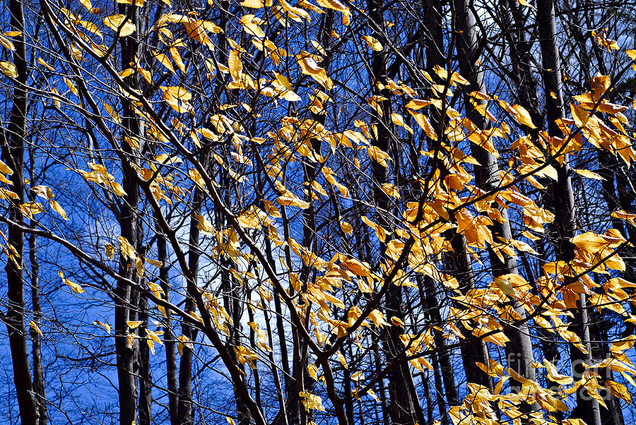 Forest Photograph - Late Fall by Elena Elisseeva