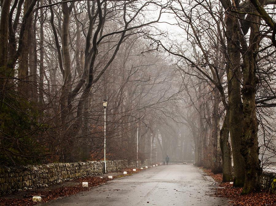Fall Photograph - Late Fall Walk by Brian Grzelewski
