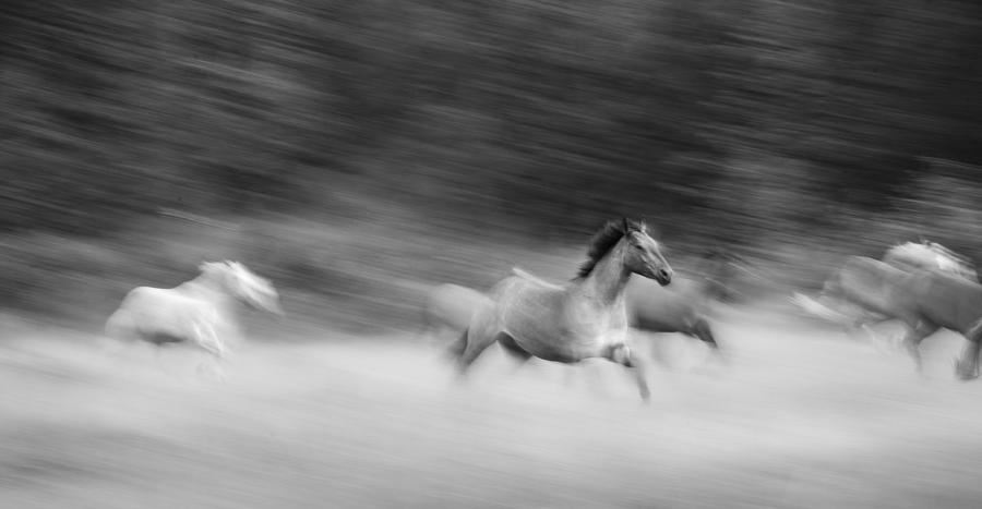 Horses Photograph - Late For Breakfast by Dianne Arrigoni