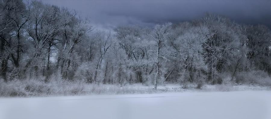 Tree Photograph - Late Snow At The Rio Grande by Ellen Heaverlo