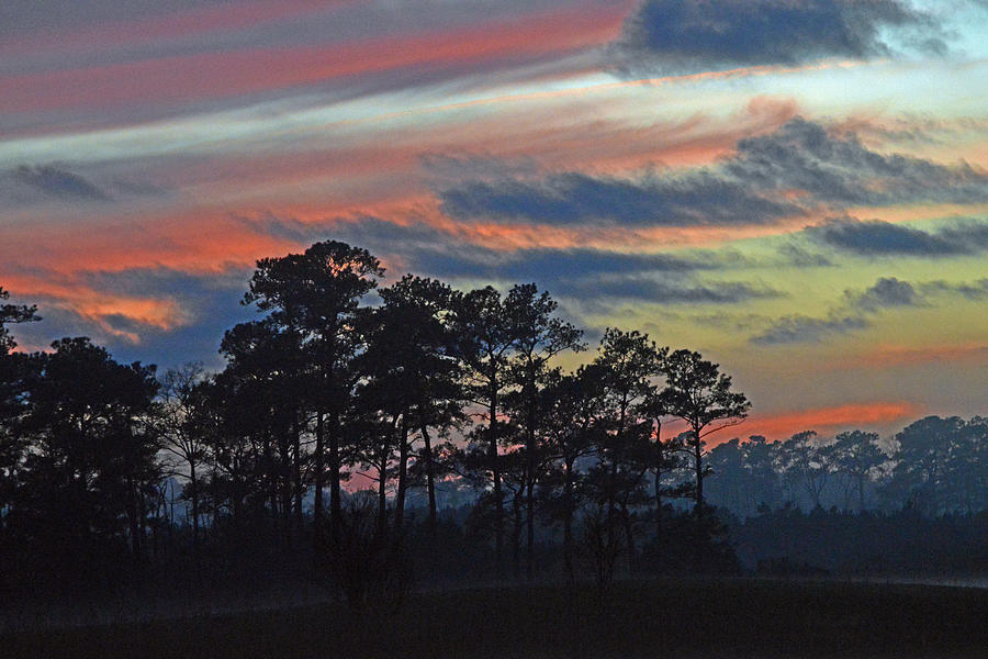 Golfcourse Photograph - Late Sunset Trees In The Mist by Bill Swartwout Fine Art Photography