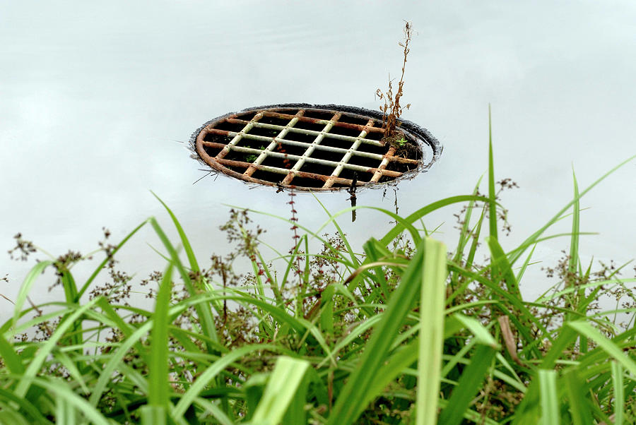 Grass Photograph - Lattice Drain Cover by Gustoimages/science Photo Library