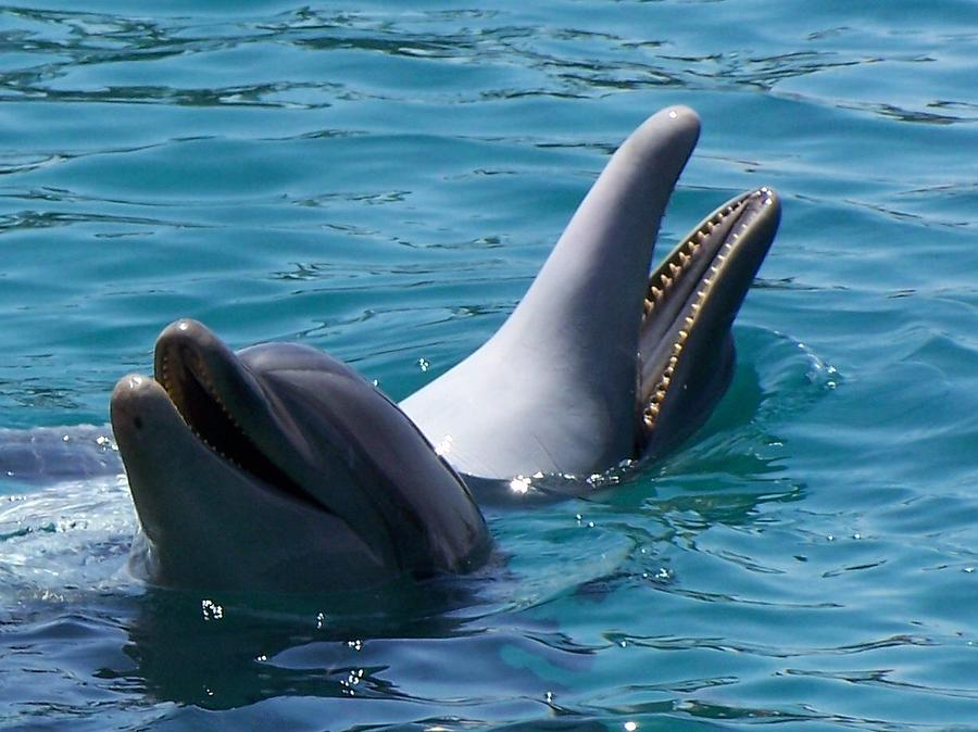 Dolphins Photograph - Laughing Dolphins by Noreen HaCohen