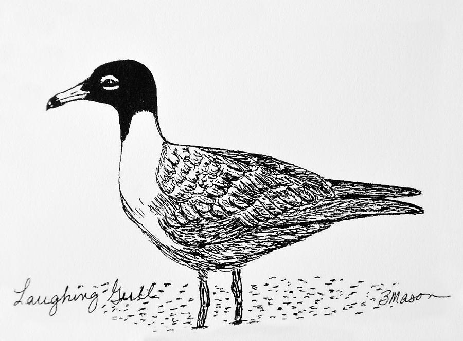 Birds Drawing - Laughing Gull by Becky Mason