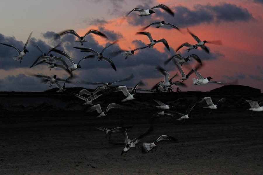 Twilight Photograph - Laughing Gull Twilight by Candice Trimble