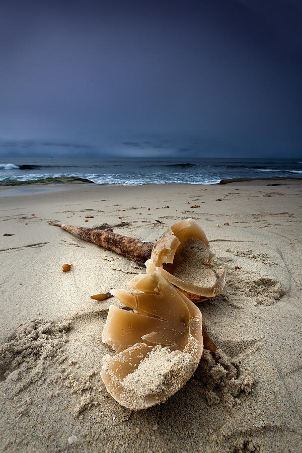Beach Photograph - Laughing With A Mouth Full Of Sand by Peter Tellone