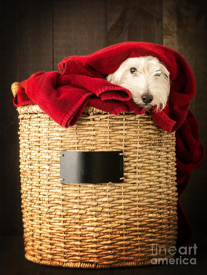 Dog Photograph - Laundry Day by Edward Fielding