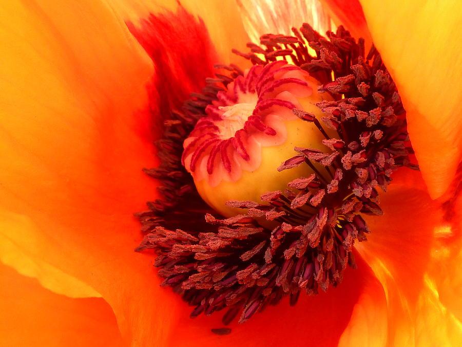 Flower Photograph - Lava Flow by Connie Handscomb