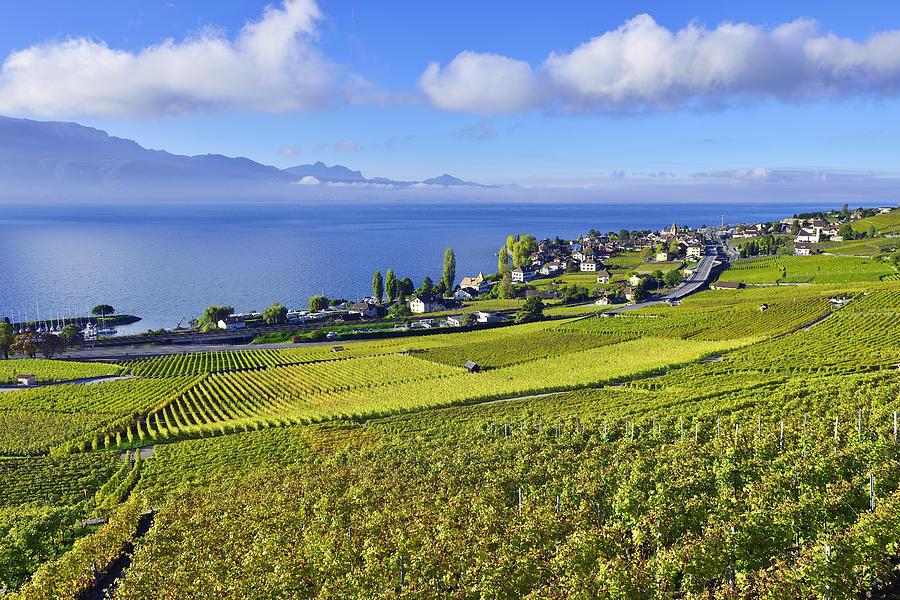Lavaux Vineyards, Switzerland Photograph by Comezora