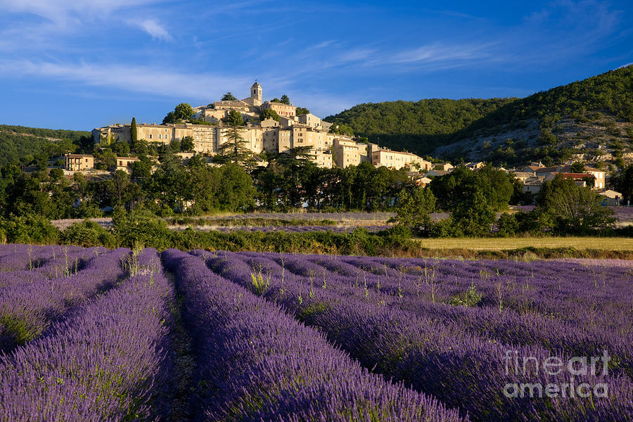 Lavender Photograph - Lavender And Banon by Brian Jannsen