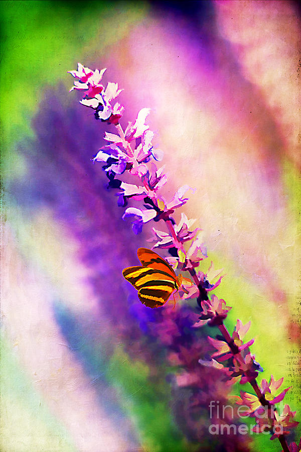 Abstract Photograph - Lavender And Butterlies by Darren Fisher