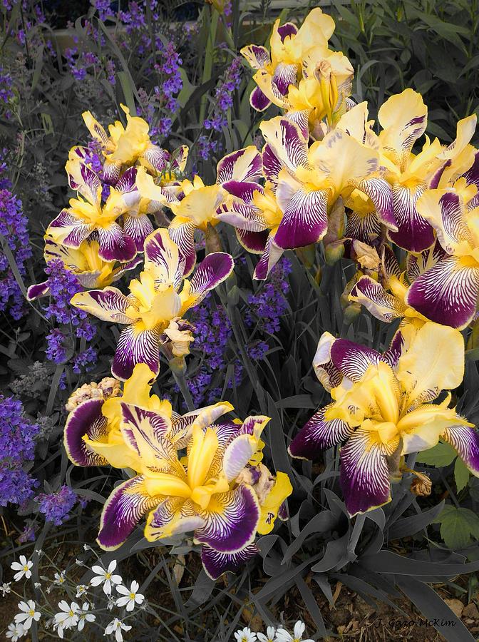 Garden Photograph - Lavender And Irises by Jo-Anne Gazo-McKim