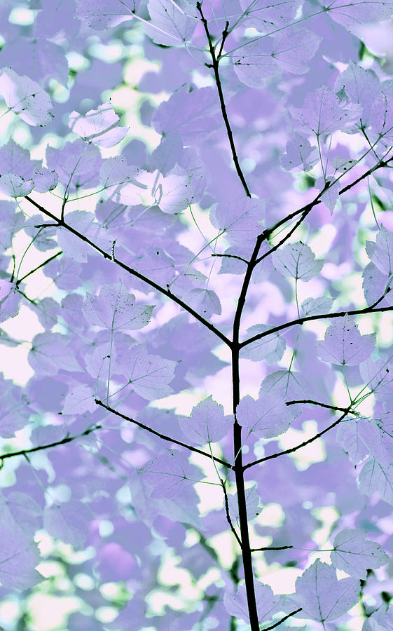 Leaf Photograph - Lavender Blues Leaves Melody by Jennie Marie Schell