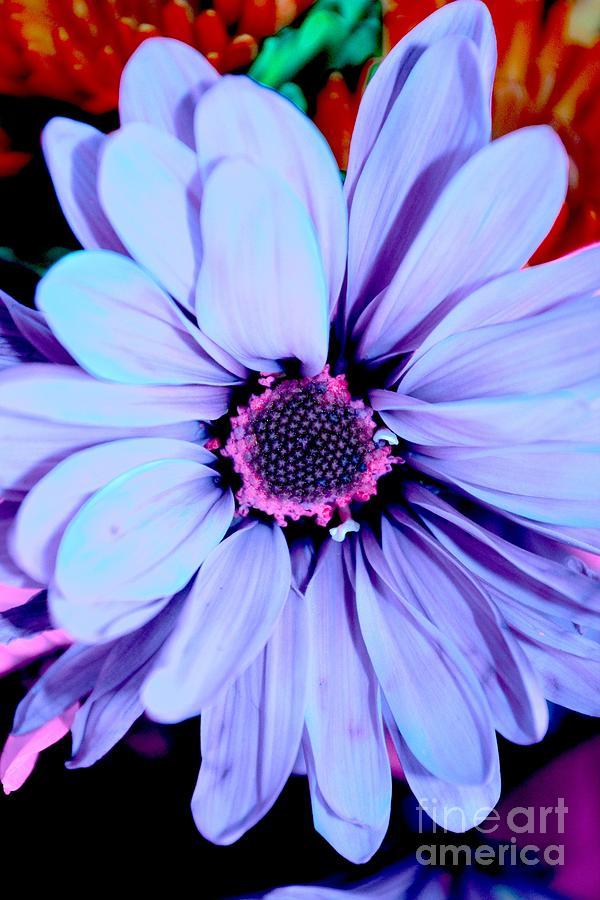 Flowers Photograph - Lavender Flower by LLaura Burge