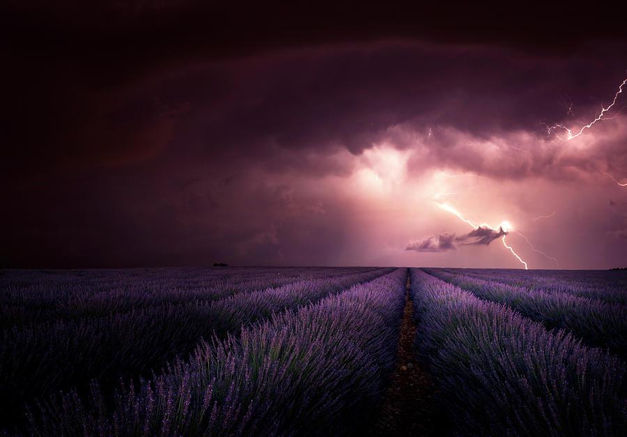 Lavender Photograph - Lavender Fragrance by Franz Schumacher