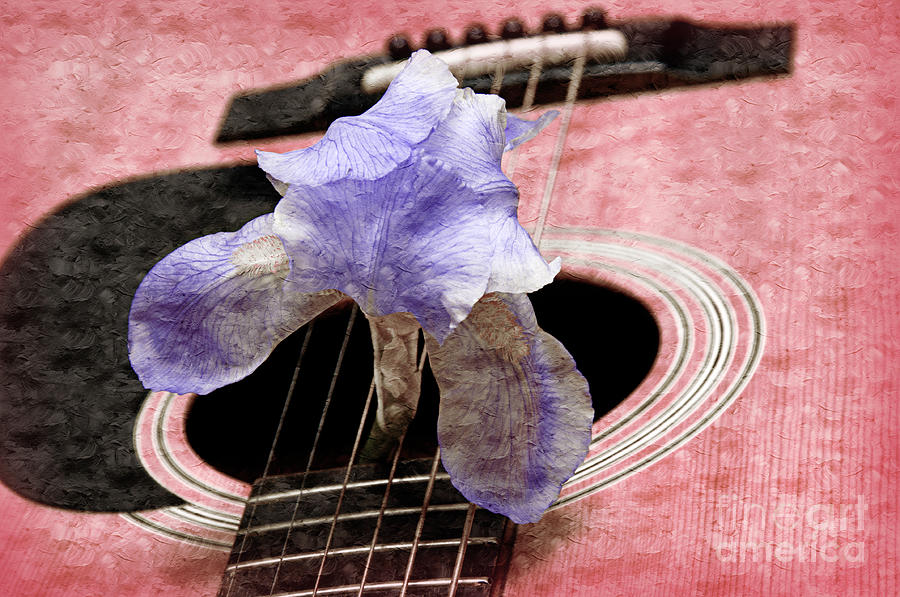 Guitar Photograph - Lavender Iris And Acoustic Guitar - Texture - Music - Musical Instrument - Painterly - Pink  by Andee Design