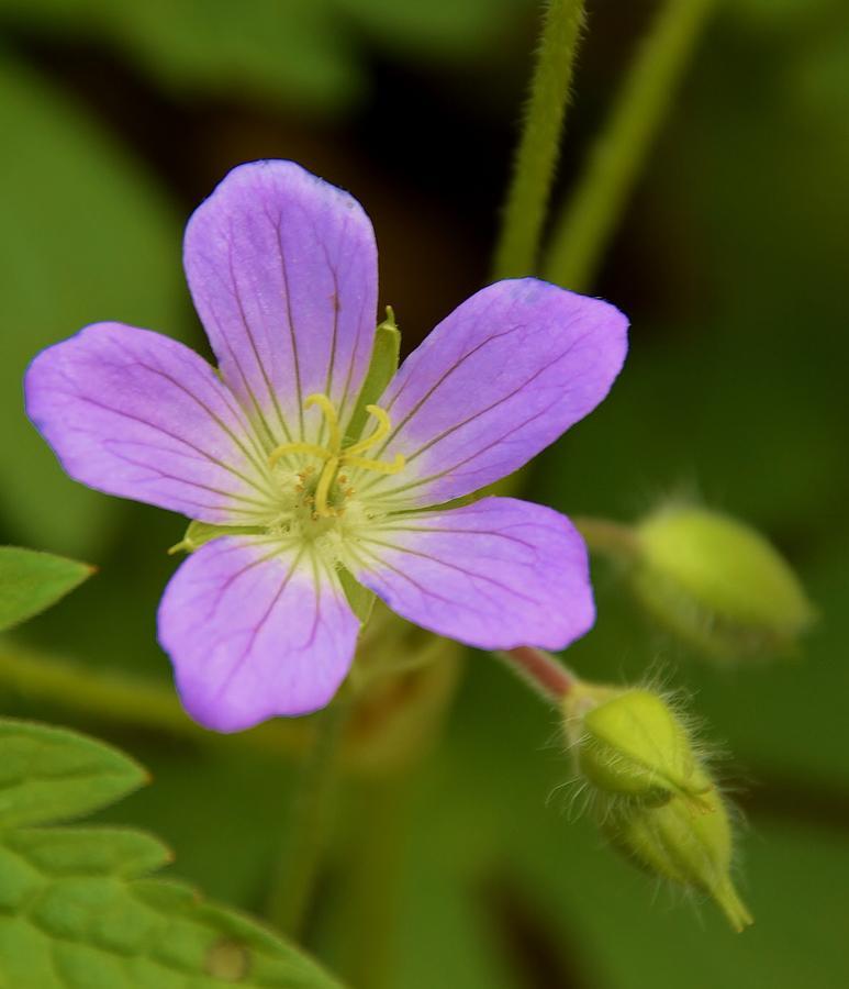 Flower Photograph - Lavender Passion by Brett Erwood