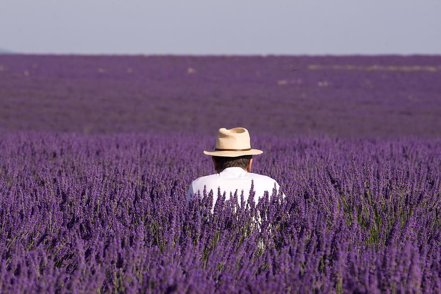 Lavender - Provence by Karim SAARI