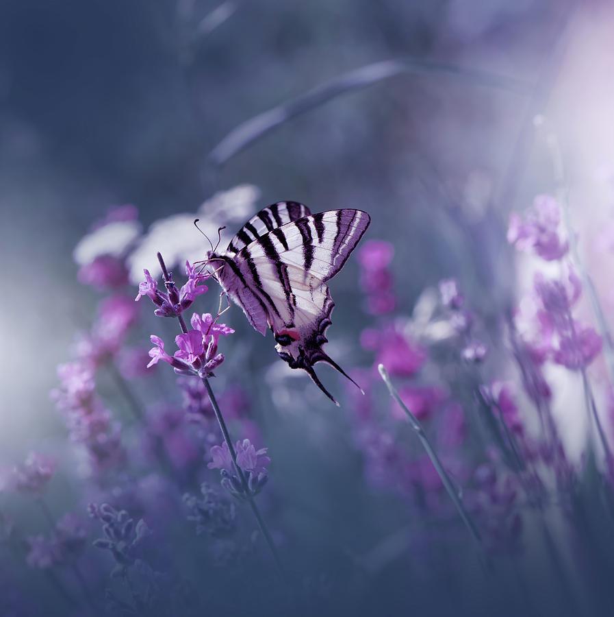 Flower Photograph - Lavender Queen... by Juliana Nan