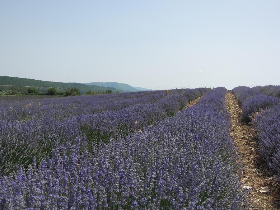 Lavender Photograph - Lavender Sky by Pema Hou