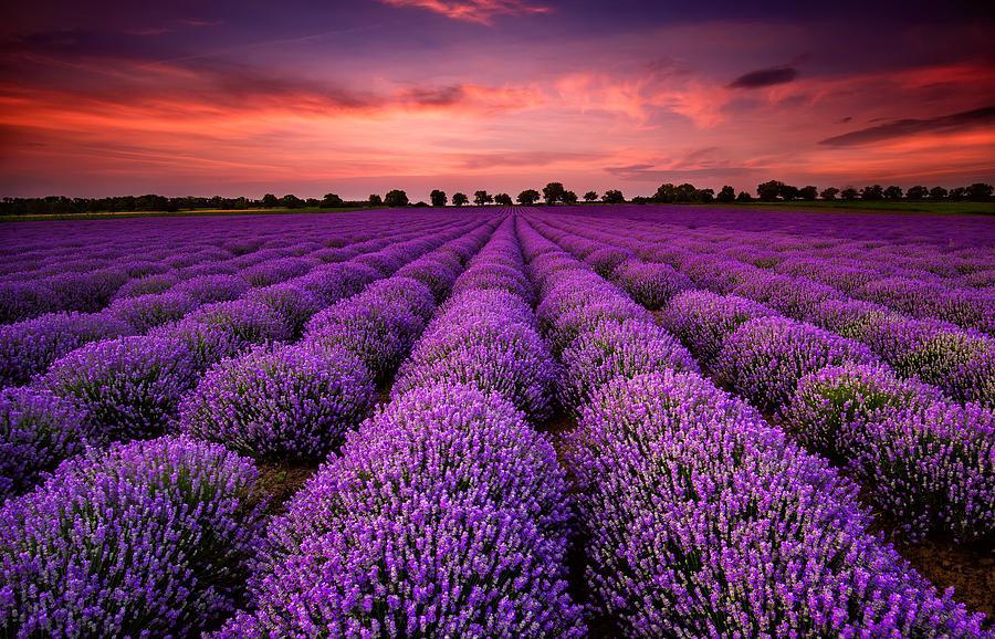 Sunset Photograph - Lavender Sunset by Evgeni Ivanov