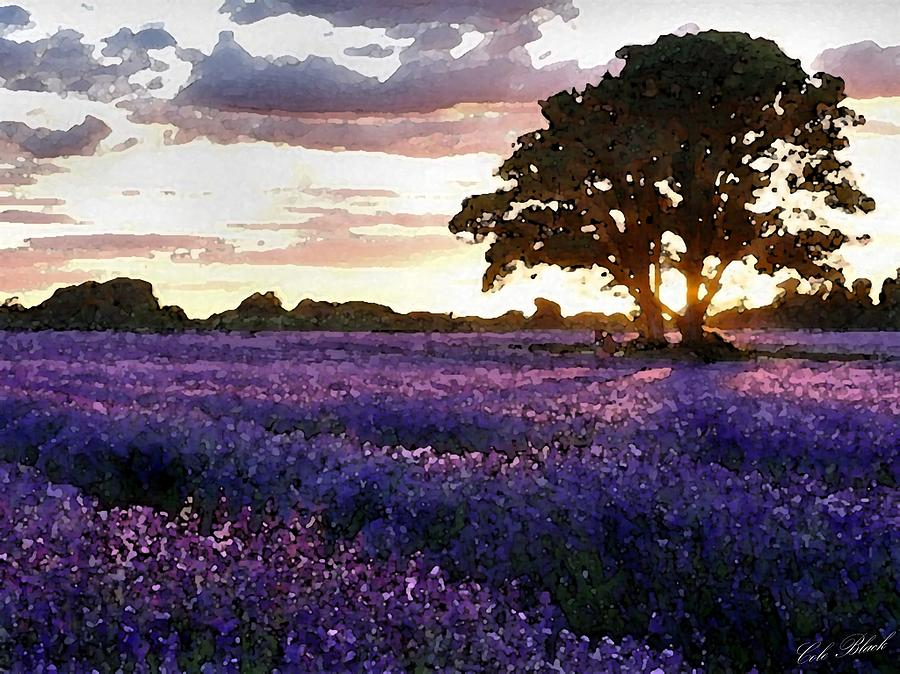 Lavender Painting - Lavender Sunset by Cole Black
