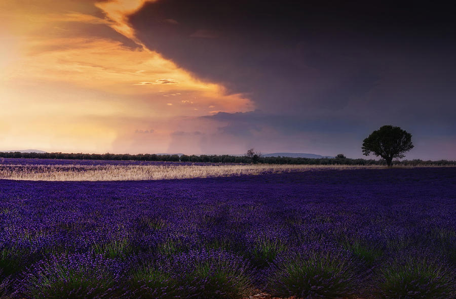Lavender Field Photograph - Lavender Thunderstorm by Claudia Moeckel