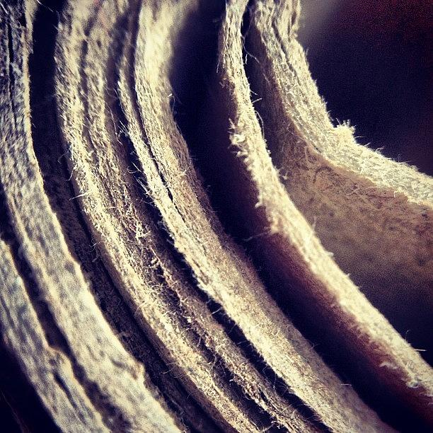 Macro Photograph - Layers by Nic Squirrell
