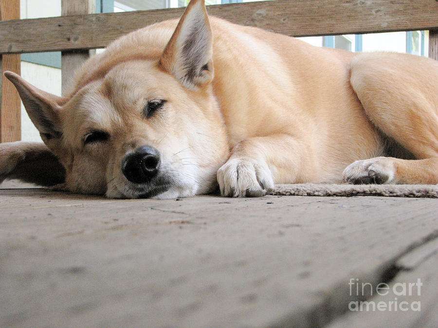 Dog Photograph - Lazin On The Porch by Rory Sagner