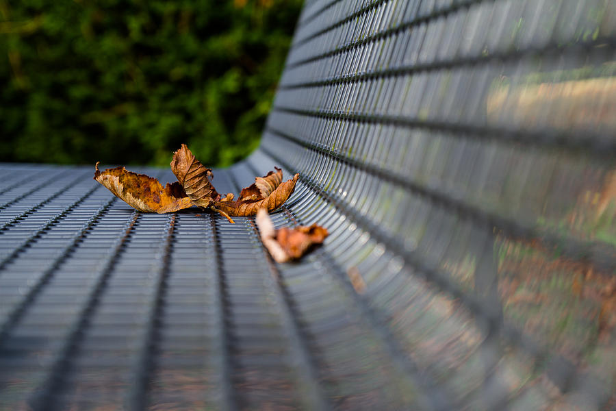 Blatt Photograph - Lazing In The Sun by Andreas Levi