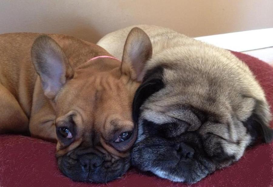 Dogs Photograph - Lazy Day by Karen OReilly