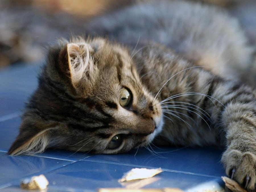 Kitty Photograph - Lazy Days by Camille Lopez