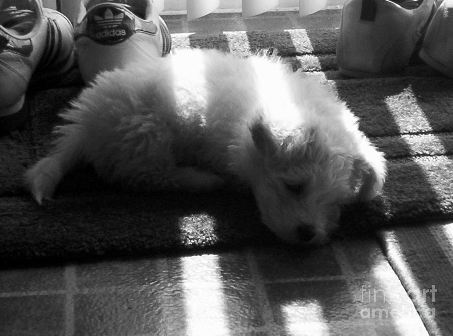 Puppy Photograph - Lazy Days by Michael Krek