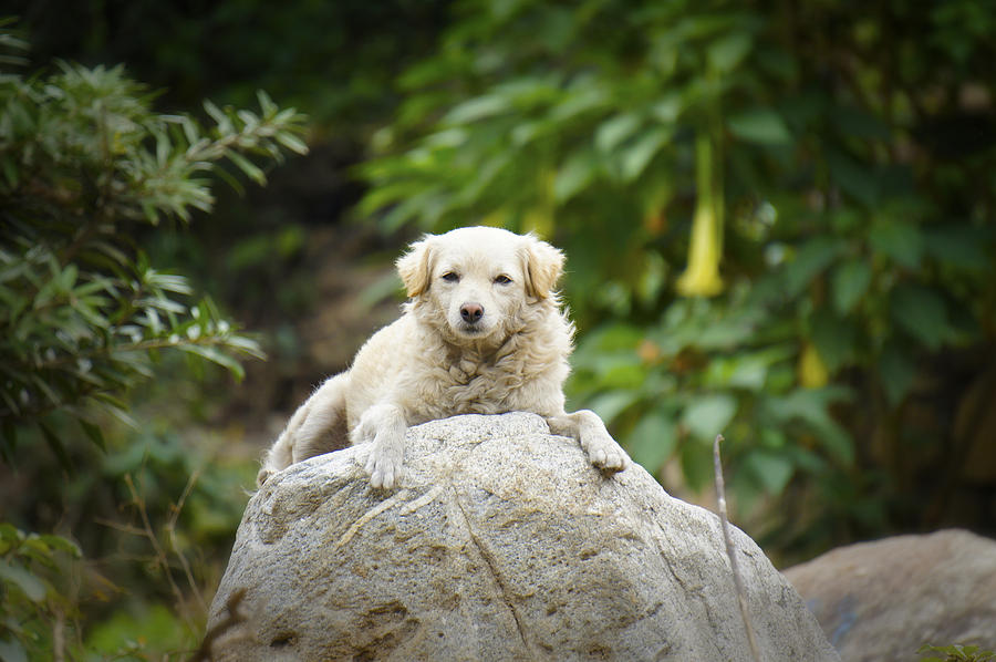 Dog Photograph - Lazy Dog by Aged Pixel