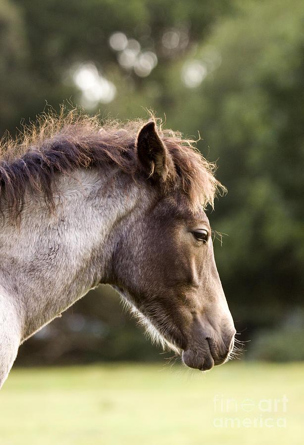 Pony Photograph - Lazy Pony by Angel  Tarantella