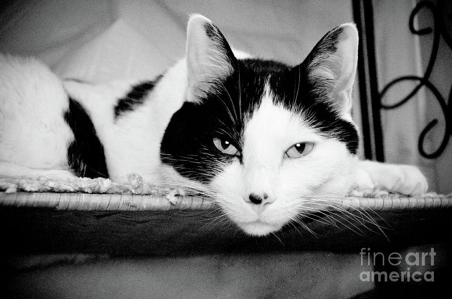 Andee Design Cat Photograph - Le Cat by Andee Design