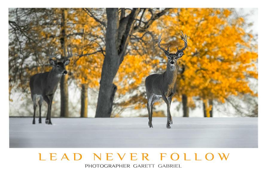 Animals Photograph - Lead Never Follow by Garett Gabriel