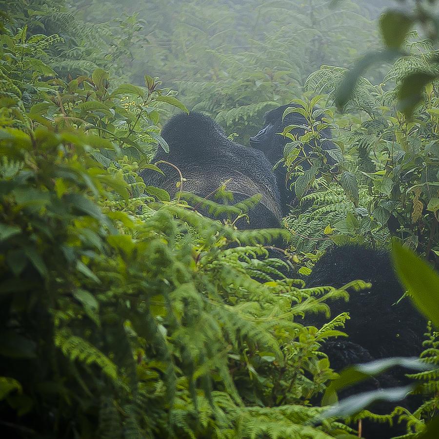 Rwanda Photograph - Leading The Way by Paul Weaver