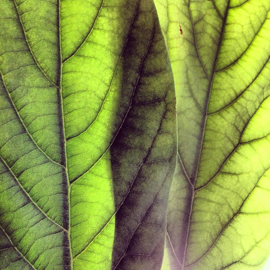 Leaf Photograph - Leaf Abstract by Christy Beckwith