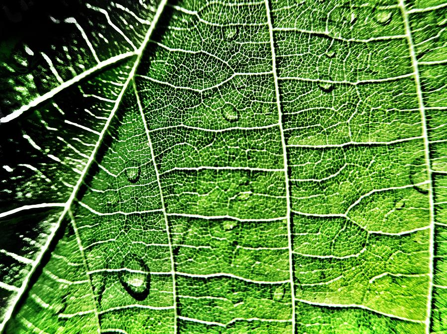 Leaf Photograph - Leaf Abstract - Macro Photography by Marianna Mills