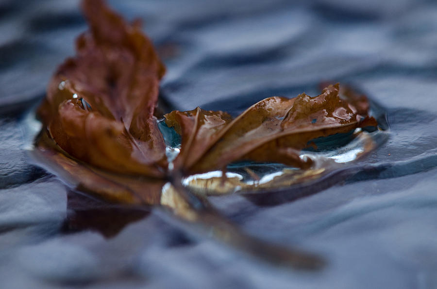 Leave Photograph - Leaf Afloat by Nancy Edwards