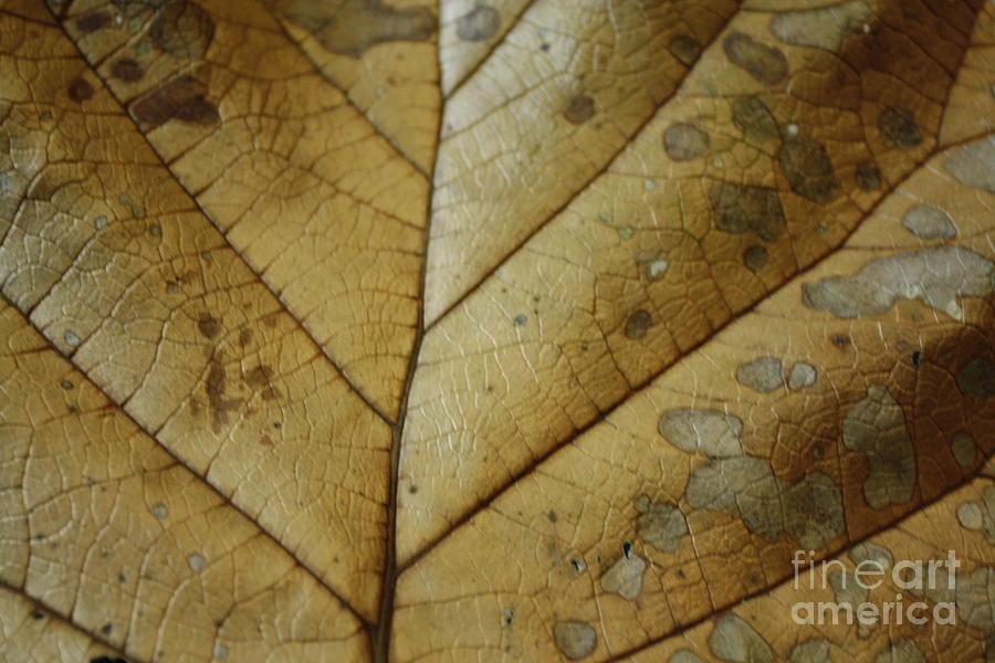 Tropical Photograph - abstract Leaf by Arelys Jimenez