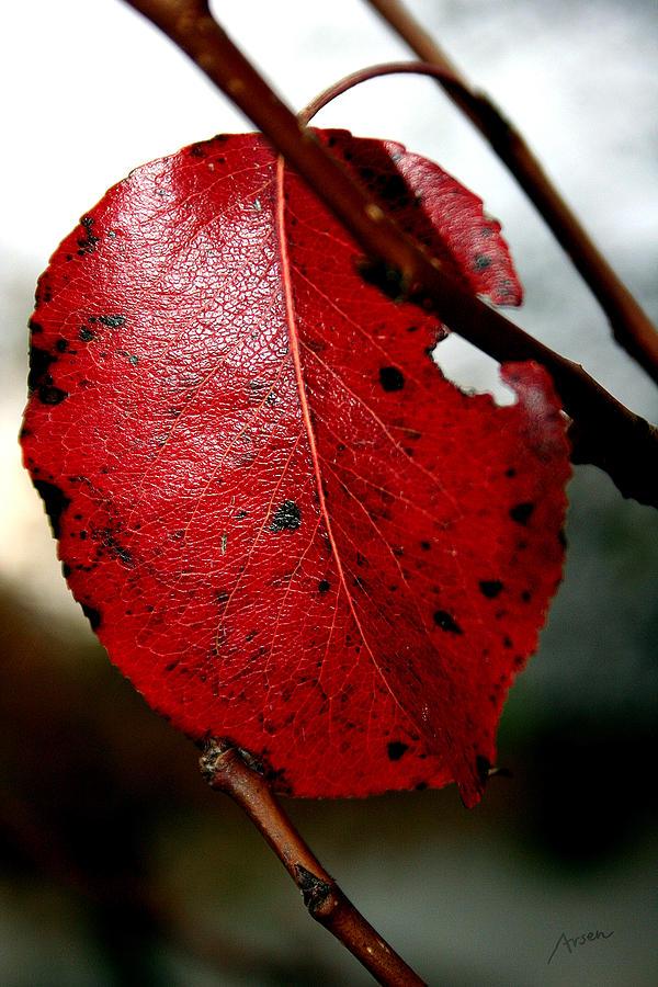Leaf Photograph - Leaf by Arsen Arsovski