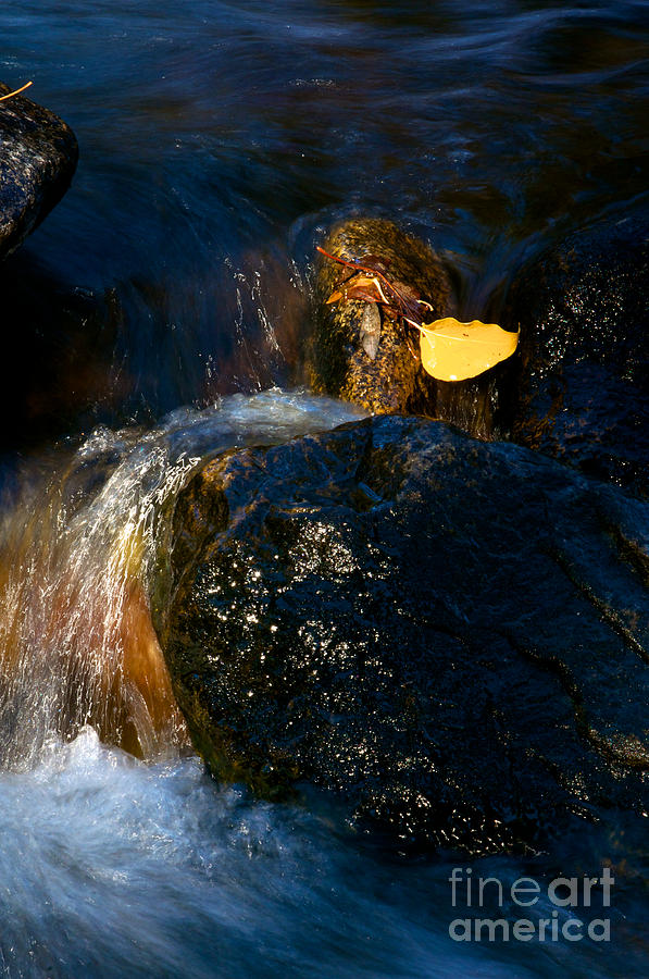 Nature Photograph - Leaf Bridge Two by Vinnie Oakes