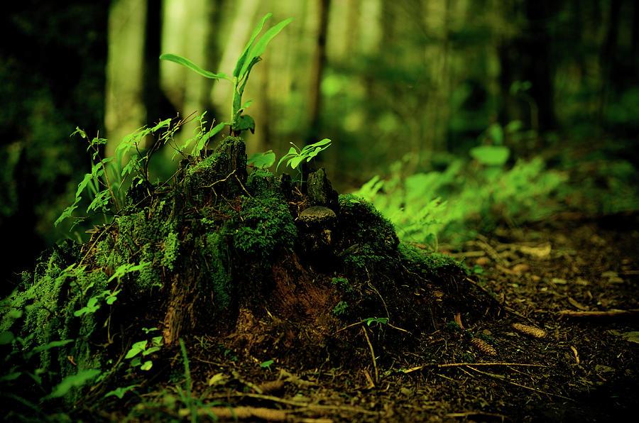 Leaf Bud Photograph by Plasticboystudio