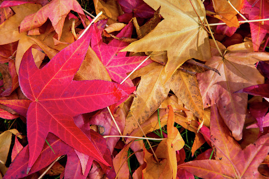 Leaf Fall Photograph by Mel Foody Photography